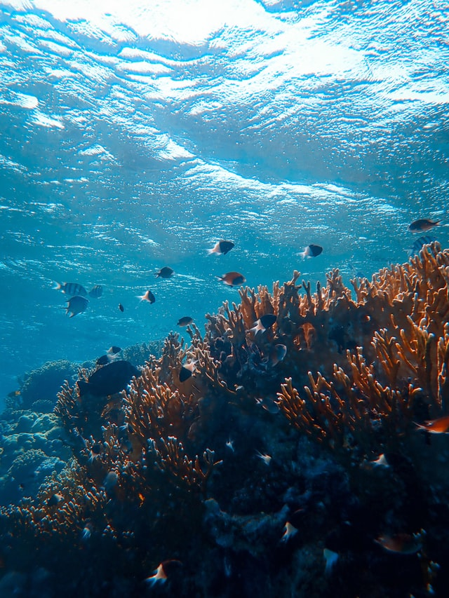 Underwater fish and coral